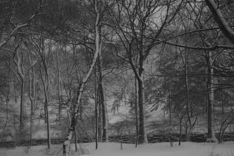 Central Park N&B