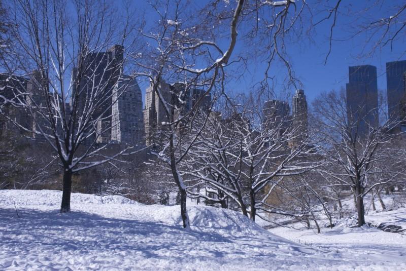 Central Park - Trees & Bulding