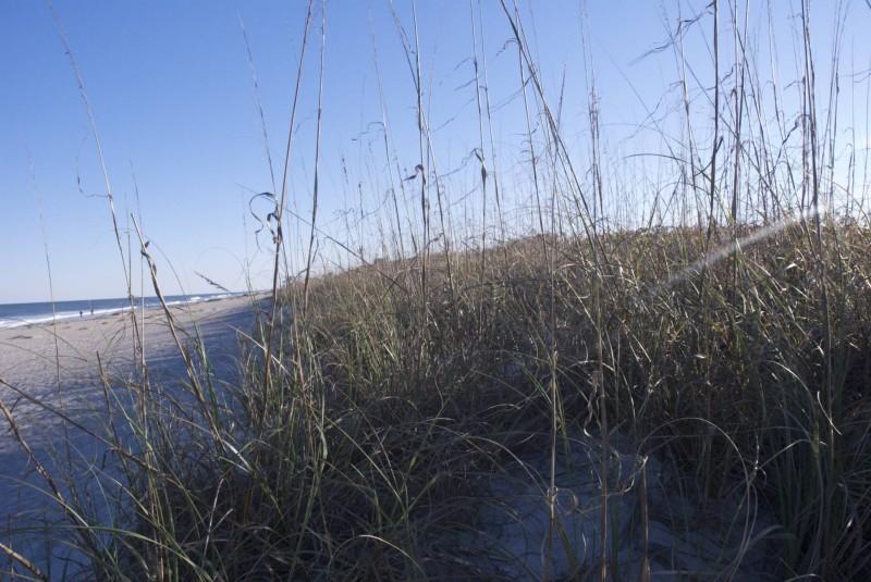 Petites herbes et plage
