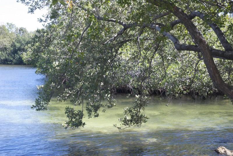 Petit bout de mangrove