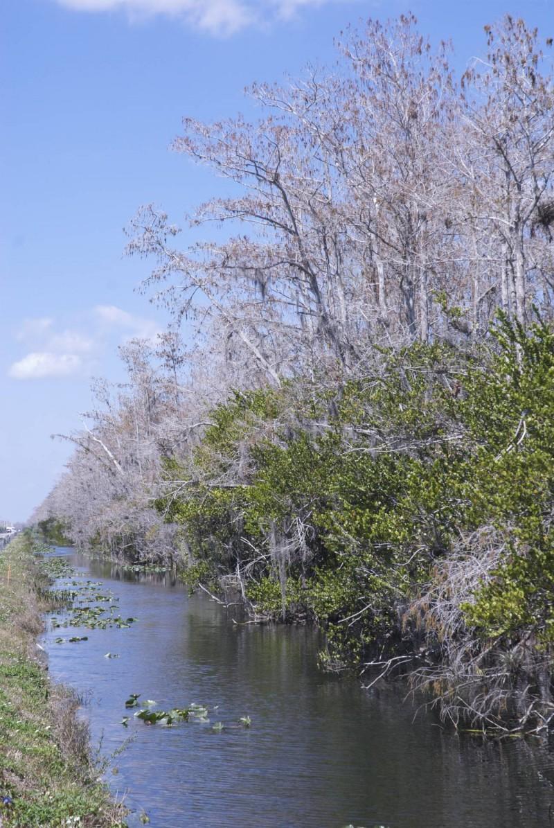 Bords de route dans les Everglades
