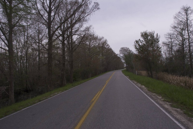A road in the bayou