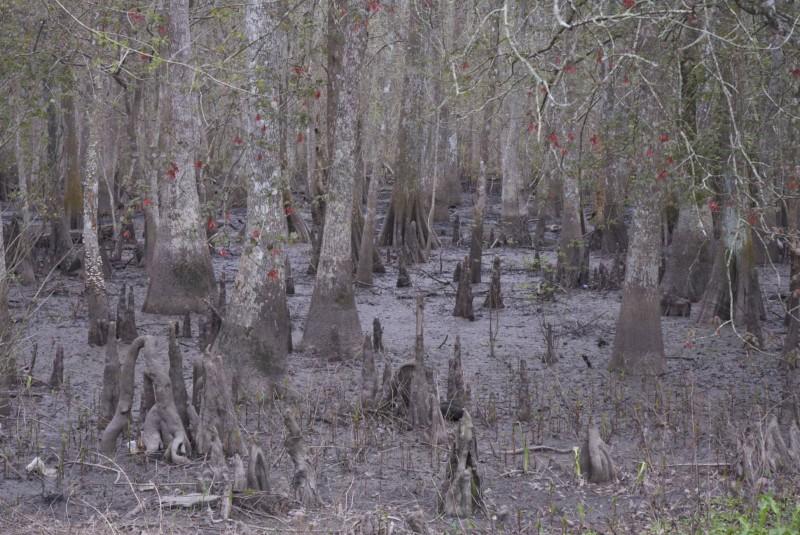 Le bayou, c'est ça !! Correction, le marais, c'est çà !!