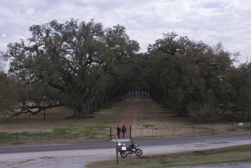 Oak Tree from the levee